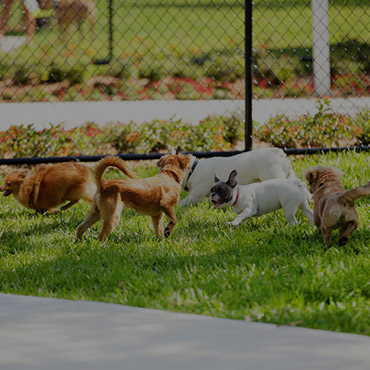 Large Dog Park at Places at Capitol Village Apartments